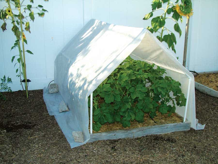 Easy PVC Pipe A-Frame Greenhouse