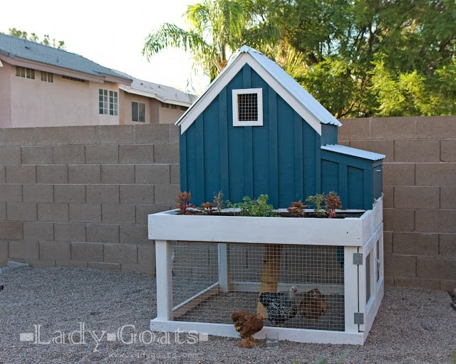 Chicken Coup Planter